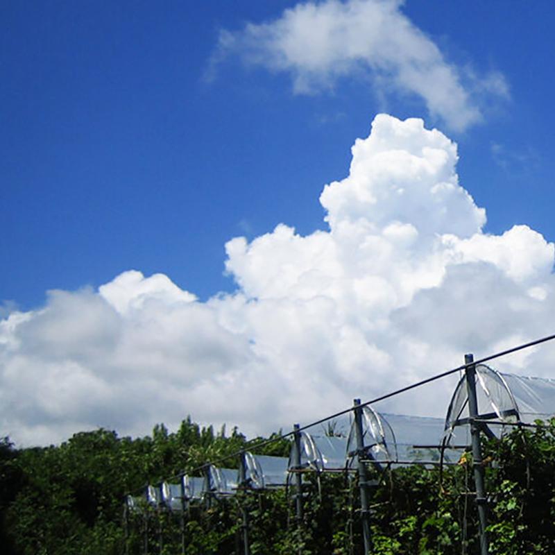 都農ワイン / TSUNO WINE