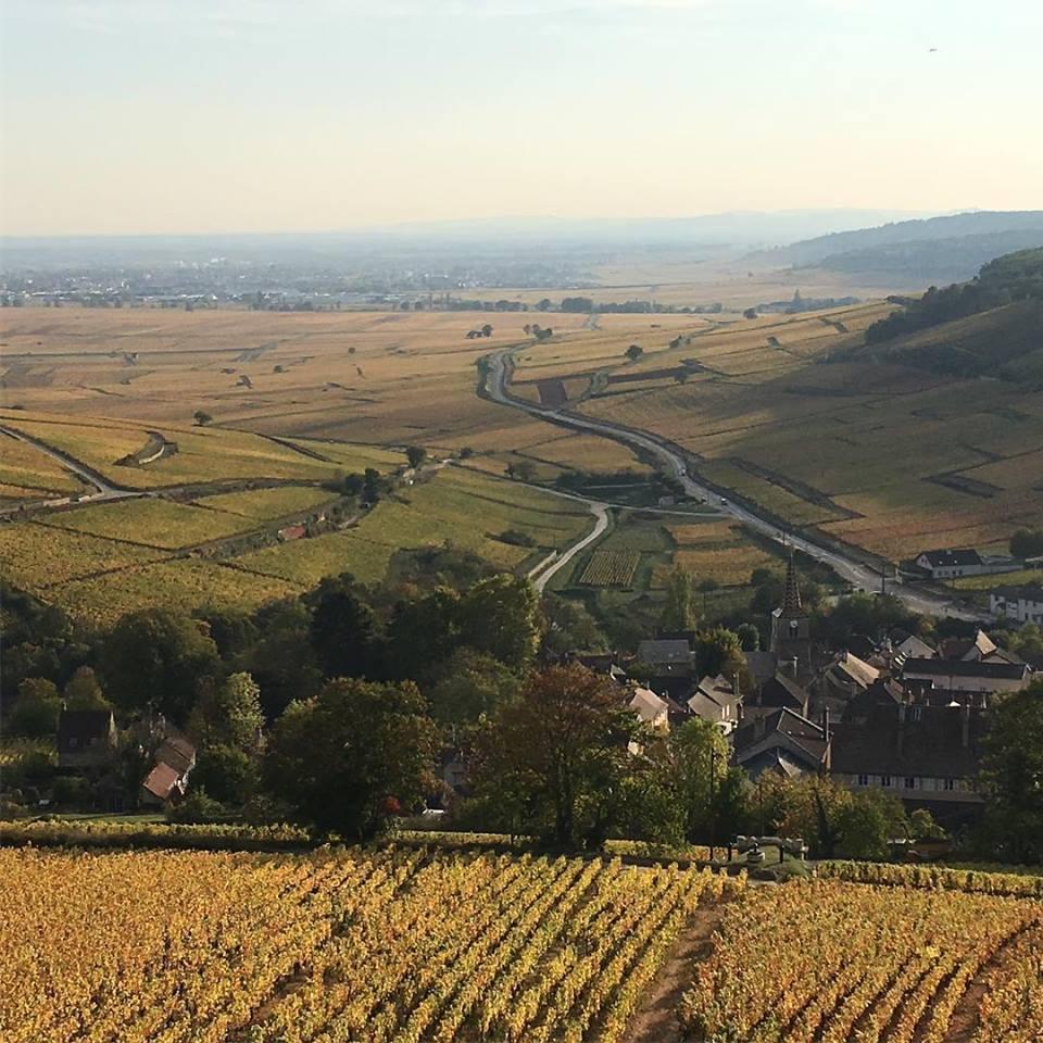 フランス ブルゴーニュ コート・ド・ボーヌ サヴィニー・レ・ボーヌ