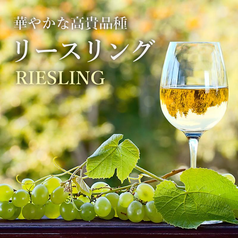 リースリング -世界の銘醸地のおすすめ銘柄!