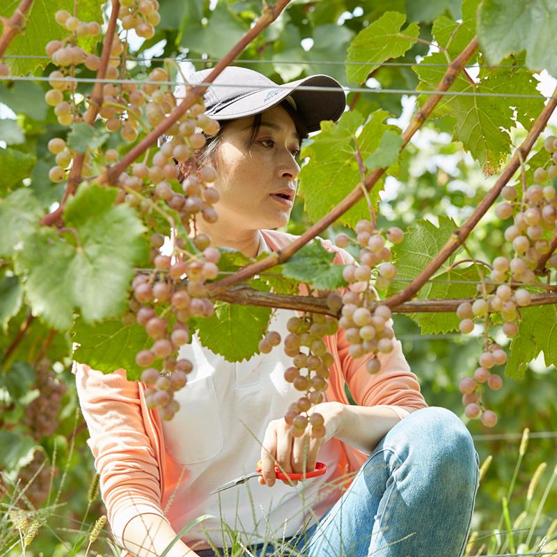 グレイスワイン (中央葡萄酒)