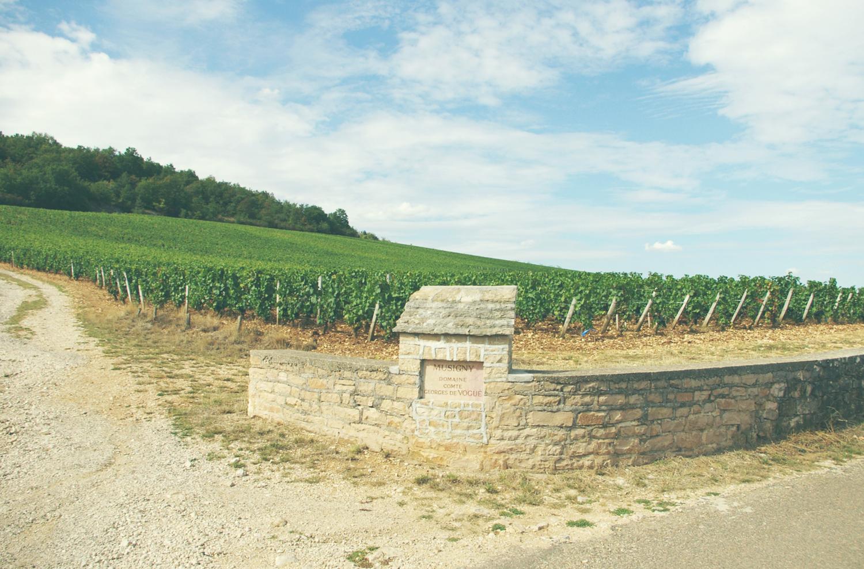 フランス ブルゴーニュ コート・ド・ニュイ シャンボール・ミュジニー