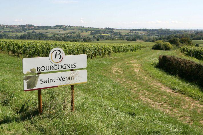 フランス ブルゴーニュ マコネ サン・ヴェラン