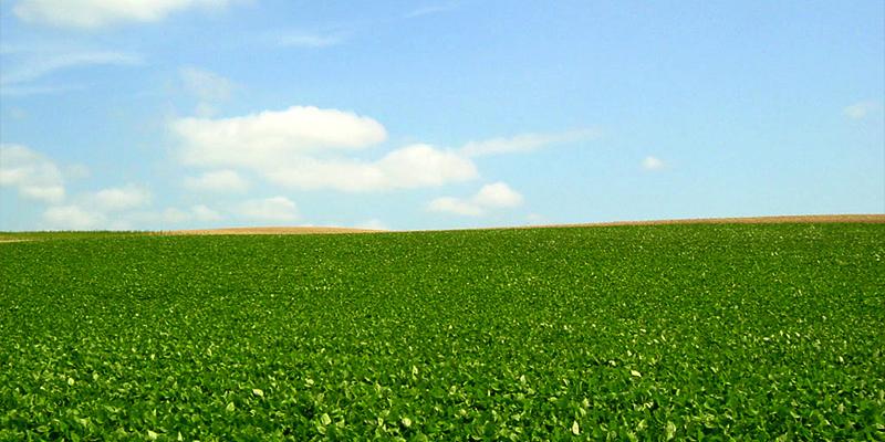 畑イメージ