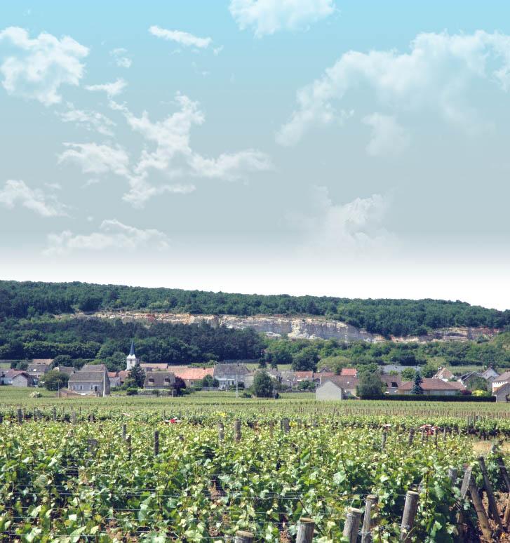 フランス ブルゴーニュ コート・ド・ボーヌ シャサーニュ・モンラッシェ