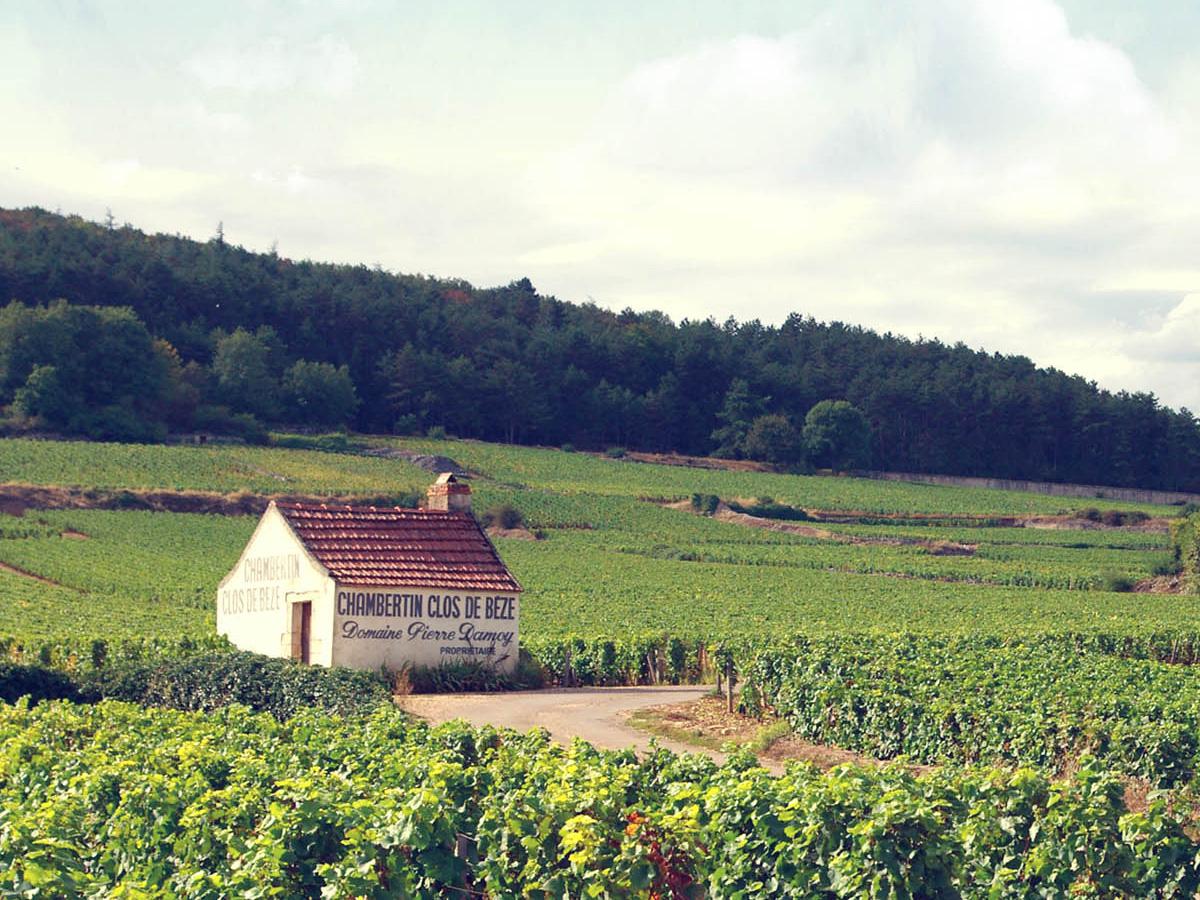 フランス ブルゴーニュ コート・ド・ニュイ ジュヴレ・シャンベルタン