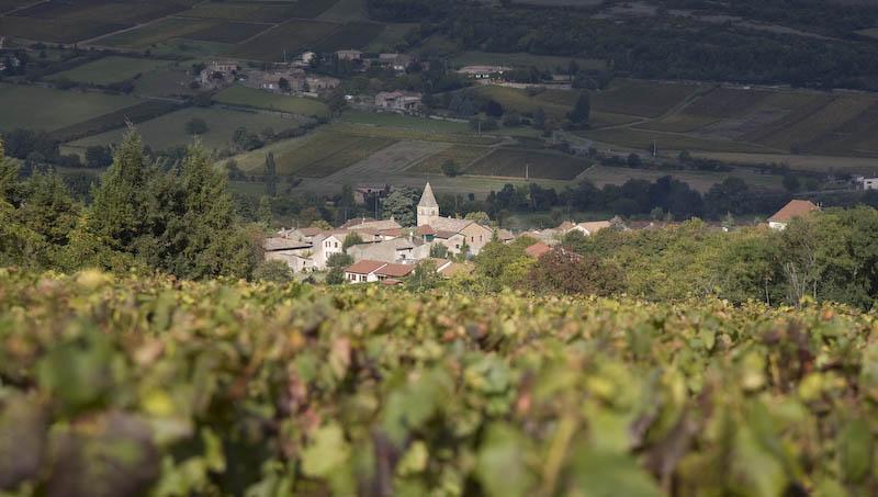 フランス ブルゴーニュ マコネ マコン
