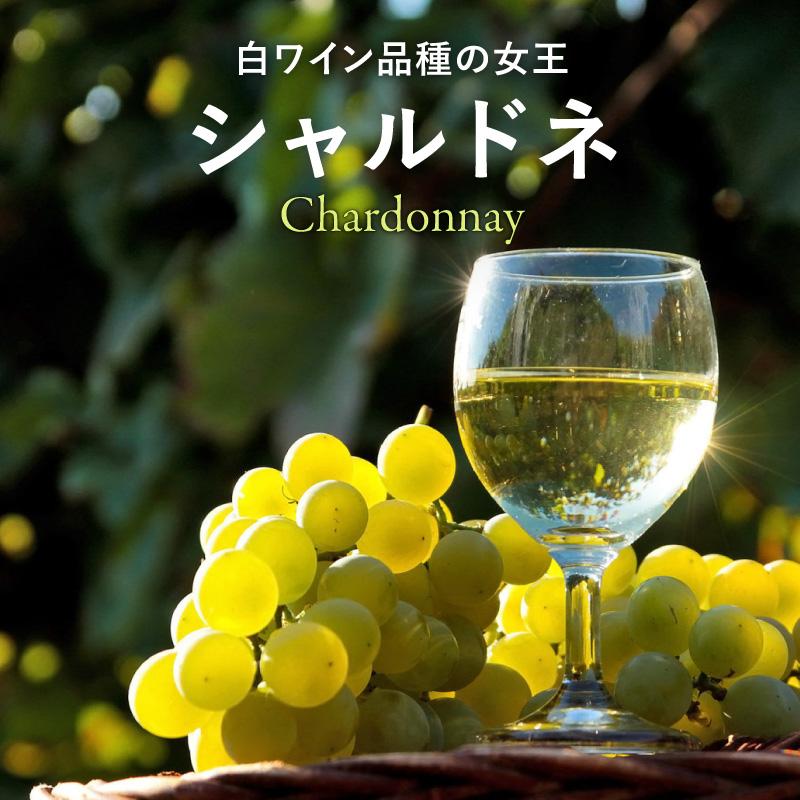 シャルドネ - 世界の銘醸地のおすすめ銘柄!