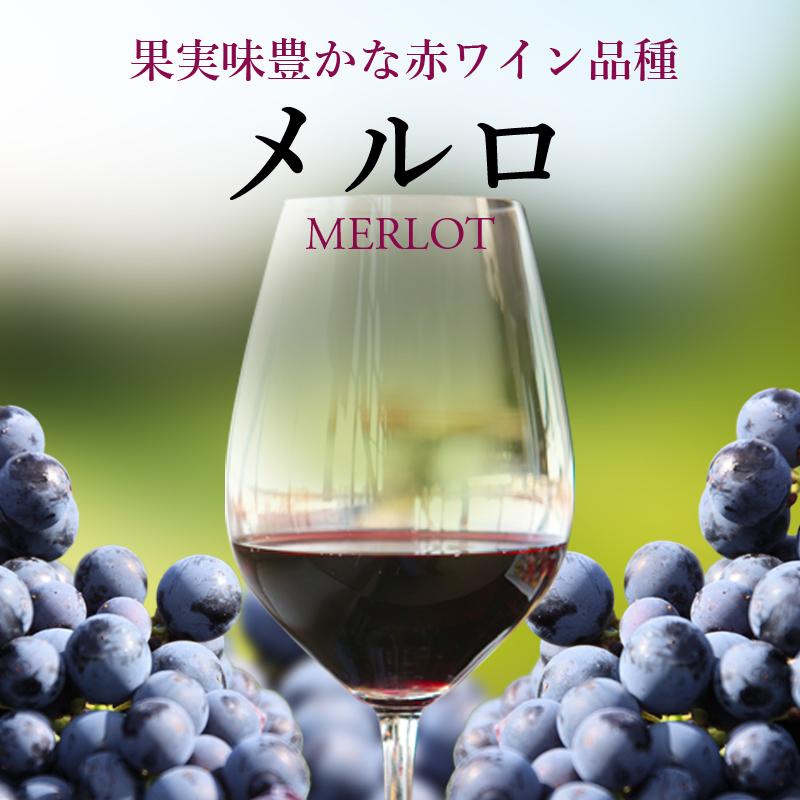 メルロ - 世界の銘醸地のおすすめ銘柄!