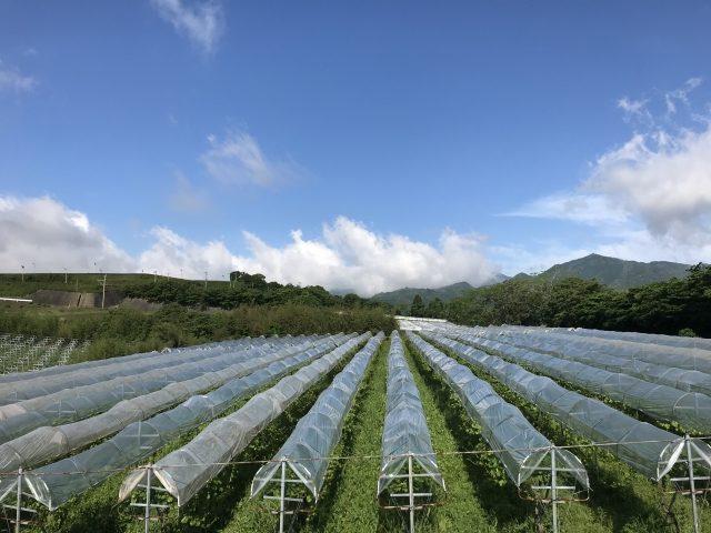 日本 宮崎県