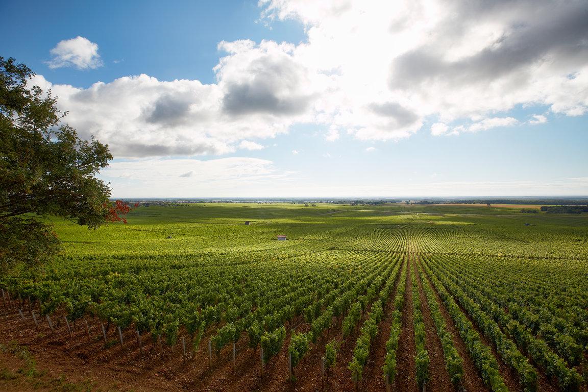 フランス ブルゴーニュ コート・ド・ニュイ
